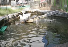 あひると亀の池